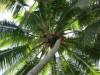 Tree climbing... nur für Schwindelfreie!
